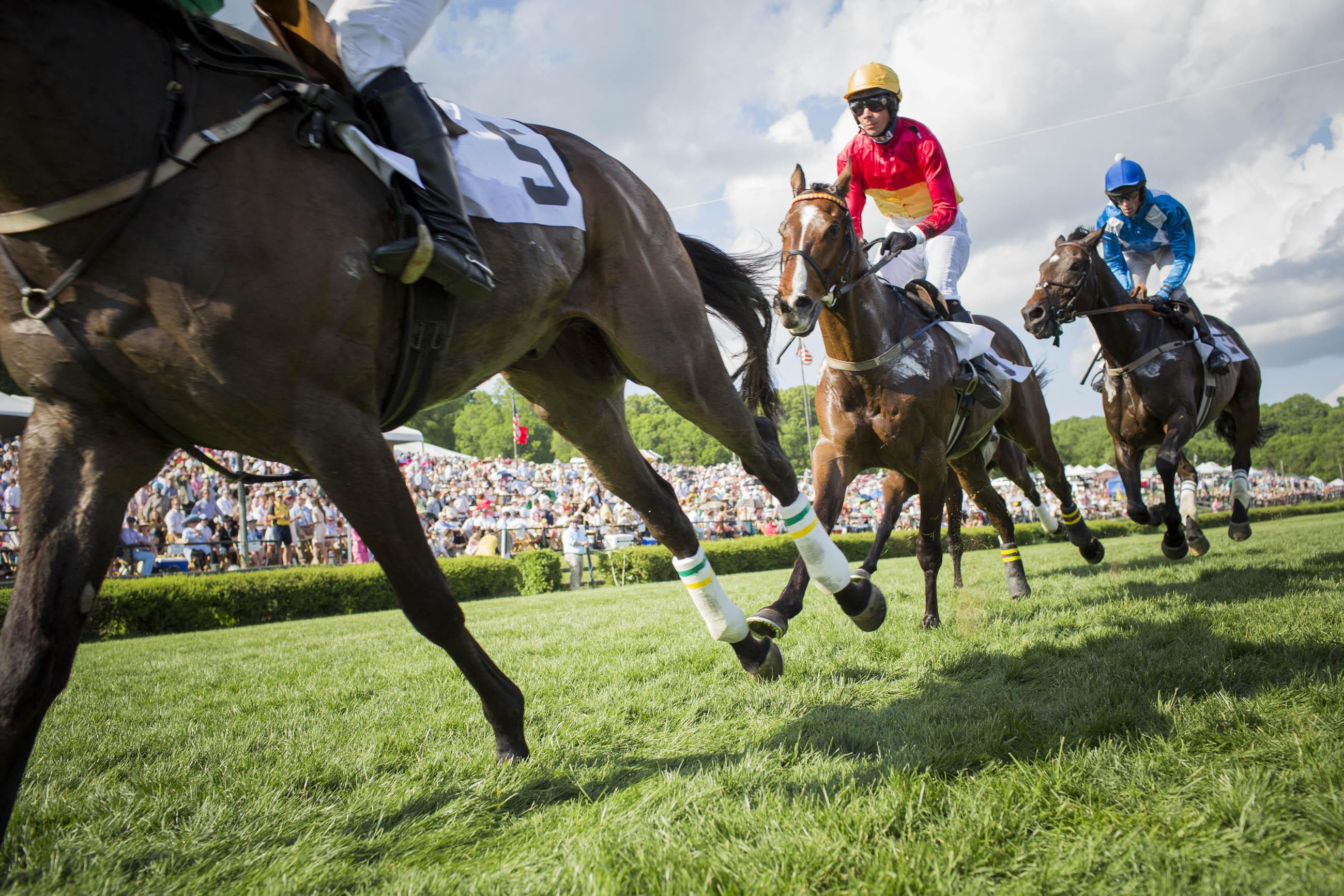 Close up horses racing